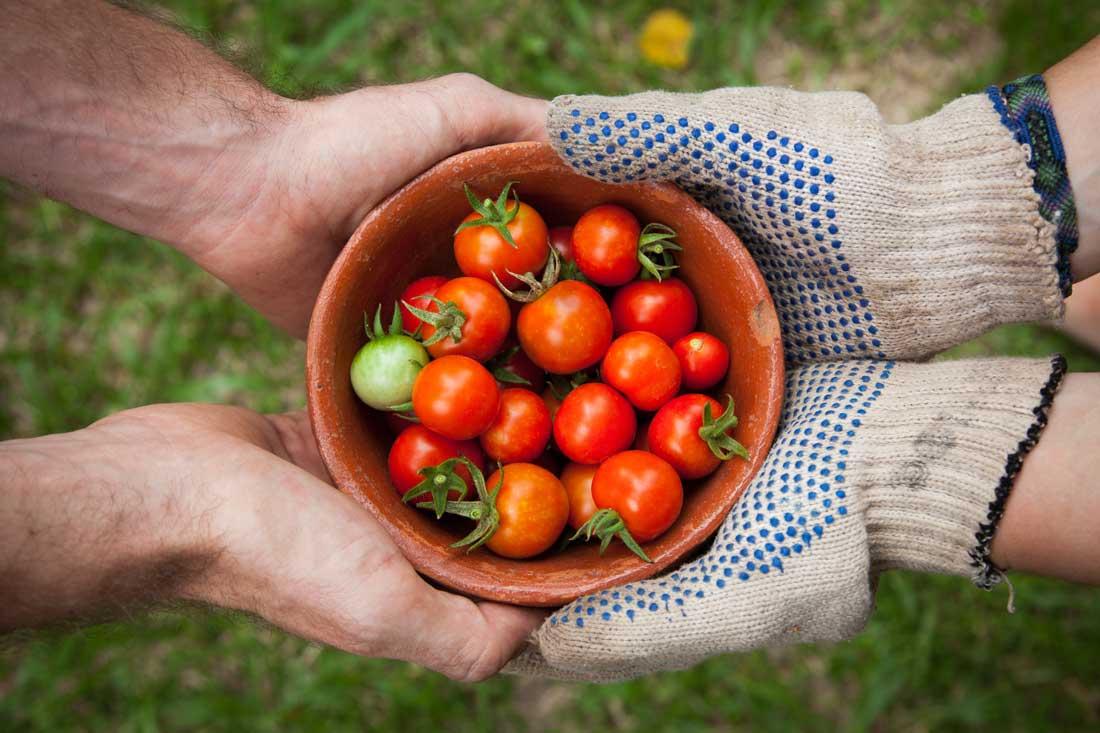 deux personnes échangeant un bol de tomates cerises